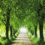 Your path to personal growth and spiritual development